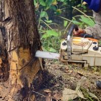 New Hampshire & Massachusetts Tree Removal