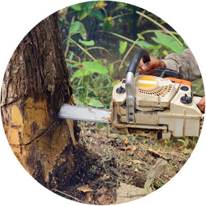 Tree Services NH