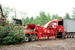 Tree Services in NH & MA